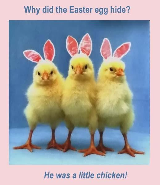 Unique Funny Easter Quotes For Friends
