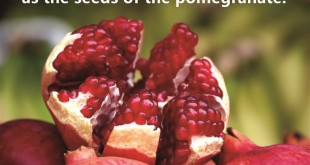 Best Pomegranate Prayer Rosh Hashanah