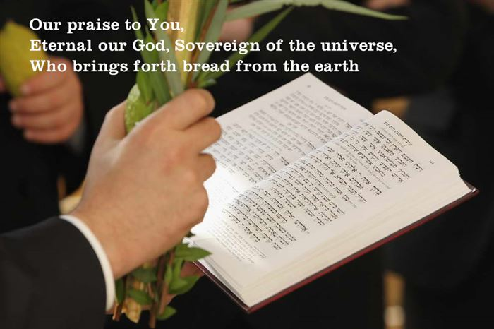 Unique Happy Sukkot Blessings Chabad