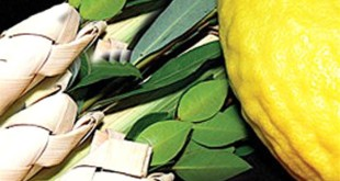 Easy Happy Sukkot Lulav Etrog Prayer