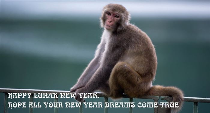 Top Chinese New Year Monkey Wishes